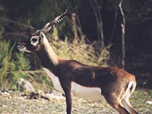 florida hunting outfitters