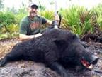 boar hunting florida