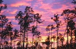 florida exotic hunting ranches