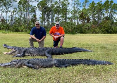 massive alligator hunt